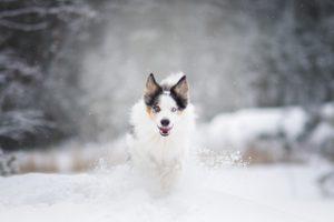Hundbilder, Hundfotografering, Hundfotograf