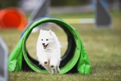 Hundsport kurser