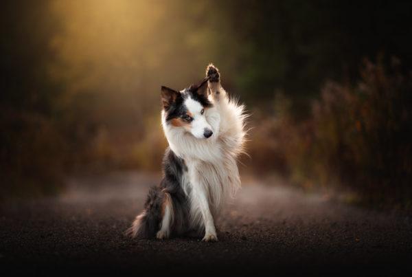 Hundfotograf i Vendelsö
