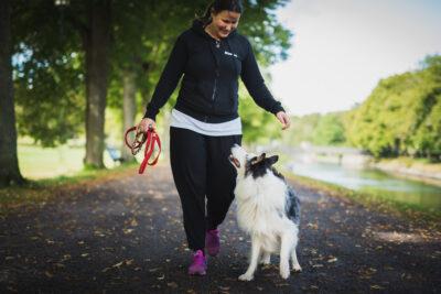 Få din hund tränad